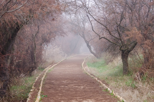 Path disappearing into the fog between autumn trees