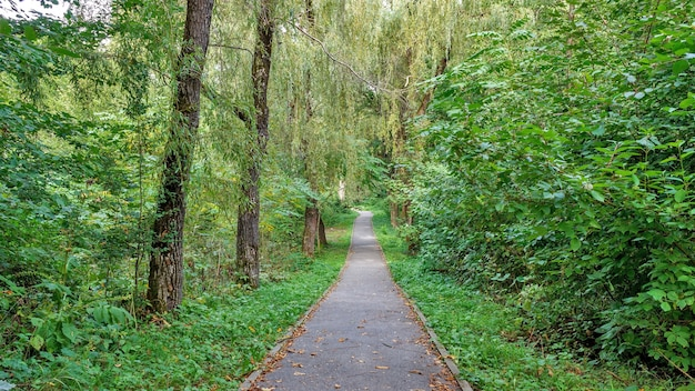 Path in the forest or park. tree alley