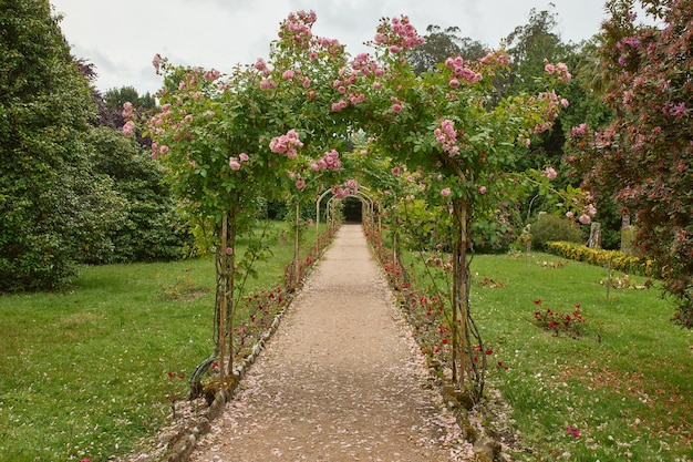 Path of a garden with tunnel of roses.