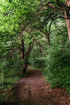 오후에 녹색 낙엽 숲의 경로