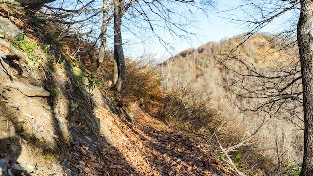 가 숲의 경로입니다. 러시아 크라스나야 폴리아나