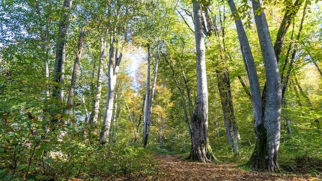 森の中の小道。ロシア、ソチ近郊の森でのハイキング。