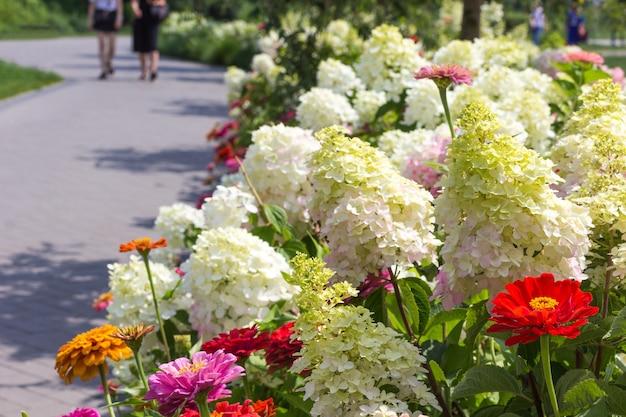 白いアジサイと赤い百日草の花壇に沿った公園の小道。
