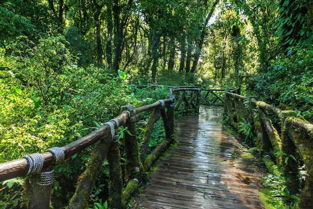 春の緑の森の小道。