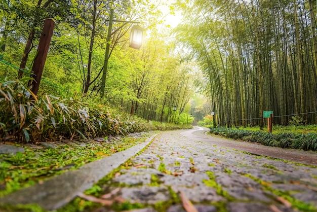 Весенняя тропа с бамбуковыми деревьями, тропинка в туристическом парке в китае