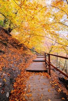 秋の黄金の森の小道、コンセプトバケーション、散歩、リラクゼーション、休日、プラグを抜いて