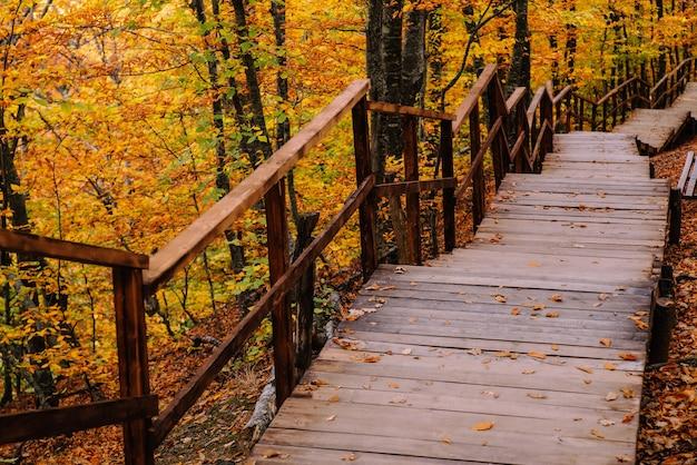 Путь в осеннем золотом лесу, концептуальный отдых, прогулка, релаксация, выходной, отключенный