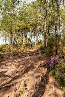 브르타뉴 브리타니 주 렌 근처에 위치한 프랑스의 신비로운 숲인 브로셀리앙드 숲의 길. 프랑스