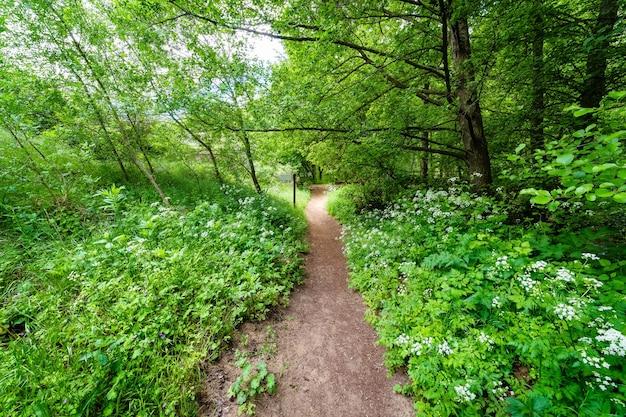 Путь в лесу среди белых цветов и пышных зеленых растений весной. романтическая сцена. река дуратен, сеговия. испания.