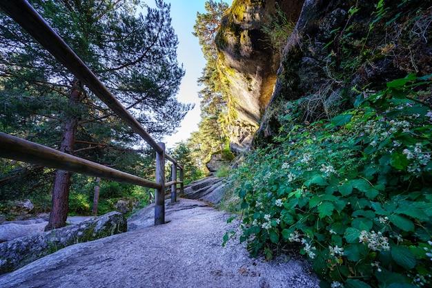 高い石の壁と巨大な松の木の間の森の小道。