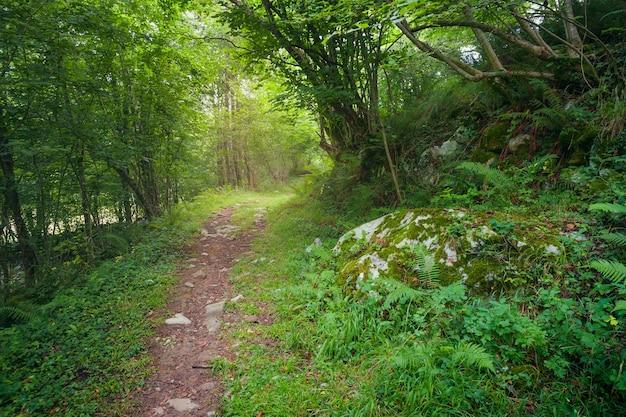 光と影の間の森の小道