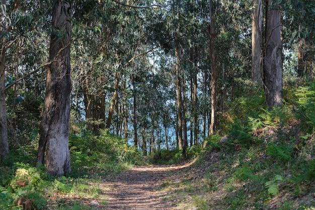 明るい晴天時の木々の間の森の小道