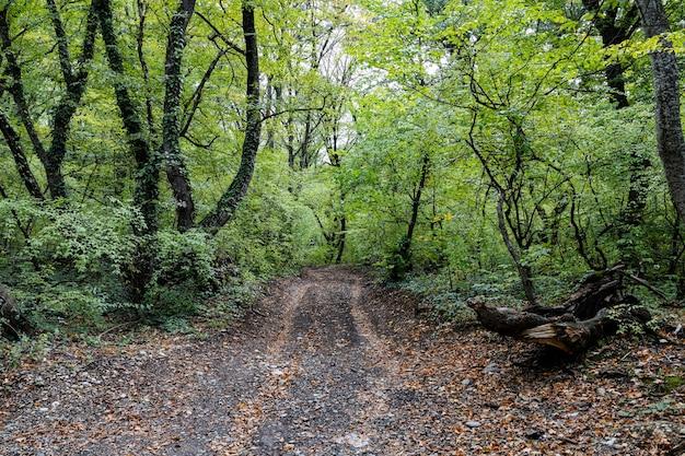 Путь в лесу в пасмурный день ранней осенью