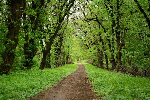Путь в лесу с зелеными деревьями