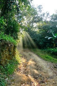 木を通過する太陽光線のある森の小道
