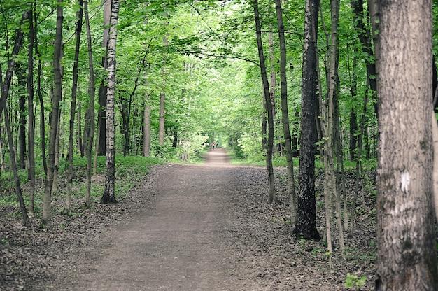 公園の小道-モスクワのイズマイロフスキー公園