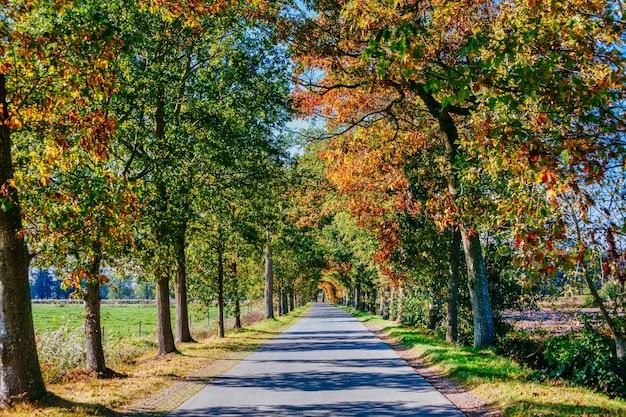 秋の背の高い木々のある公園の小道