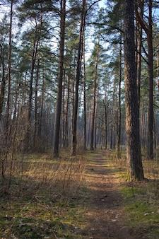 晴れた日の春の森の小道