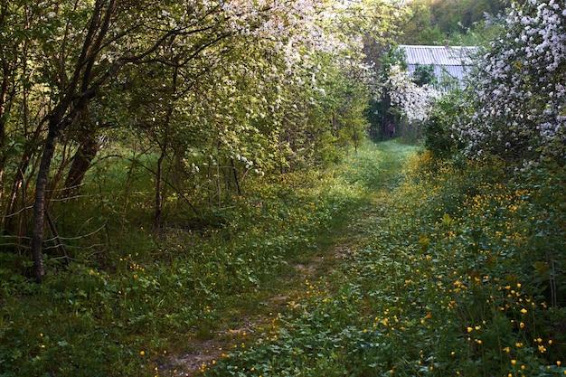 花の咲く木々や花のある村の小道