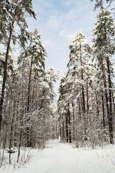 Путь в зимнем лесу. деревья засыпаны снегом. солнечный день, новогоднее настроение.