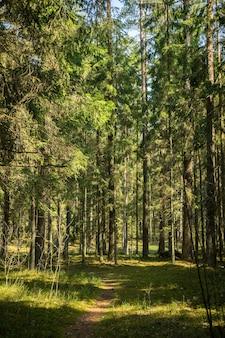 森の中の小道森の中を歩くカランタイン Premium写真