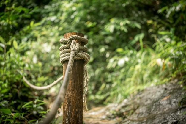 熱帯林の小道をクローズアップ