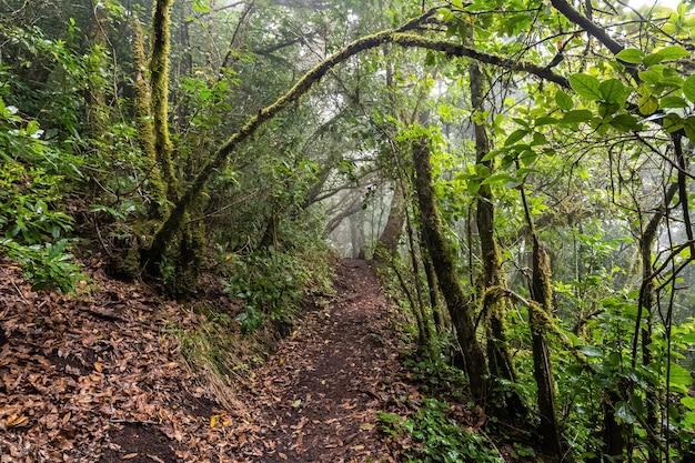 Путь в замшелый влажный лес