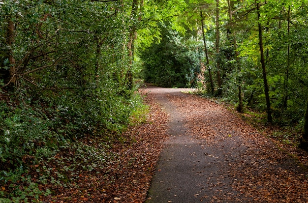 Path in the natural park. deciduous forest, autumn day