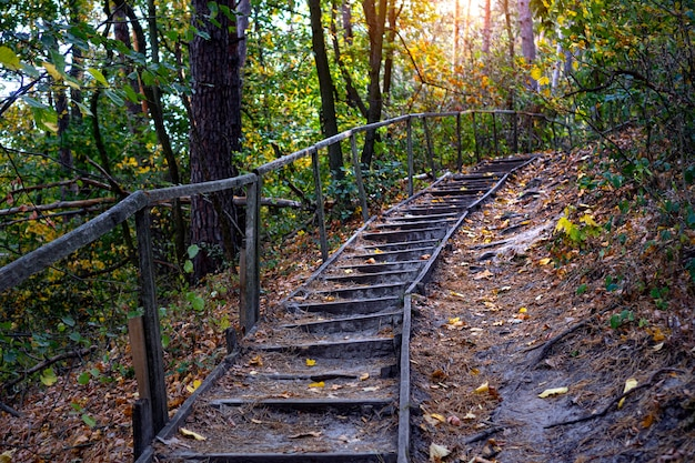 Path in natural parkland. scenic autumn forest road with old wooden steps. the path goes up the mountain. hiking on the fresh air background.