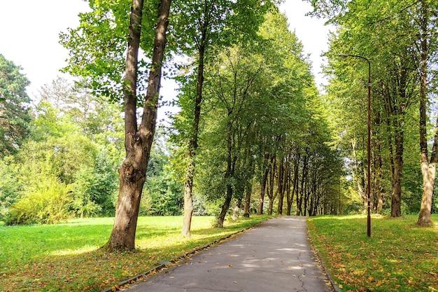 Path in public park full of trees