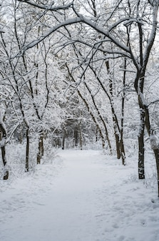 The path in the snow-covered winter forest.