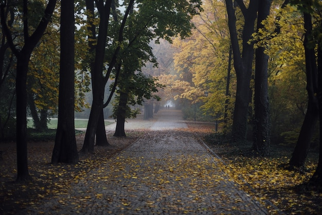 秋の公園を通る小道