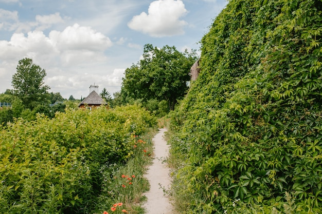 Path through foliage and ivy