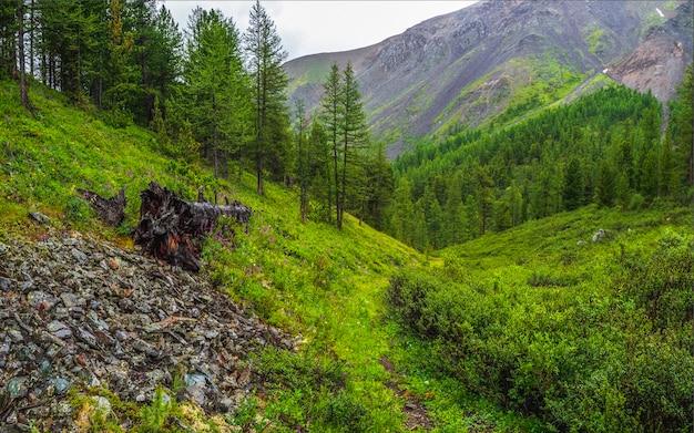 深い雨の牧草地を通る小道。大気中の緑の森の風景。針葉樹の端の森と明るい霧の中の岩のあるミニマリストのパノラマ風景。山の高山の森。