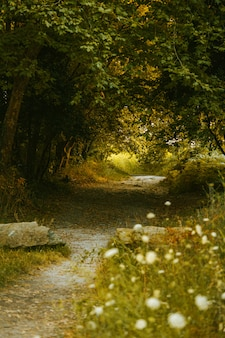 夏の色調で森の中の小道