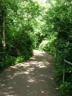 森の中を通過するパス