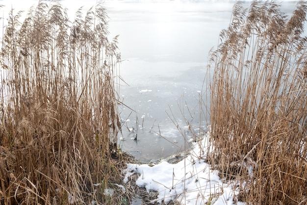 冬の凍った湖岸の乾燥した葦草を通る水辺への道