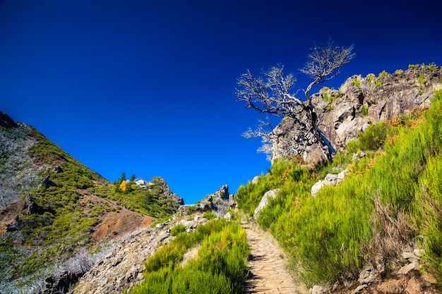 Path to the top of pico ruivo