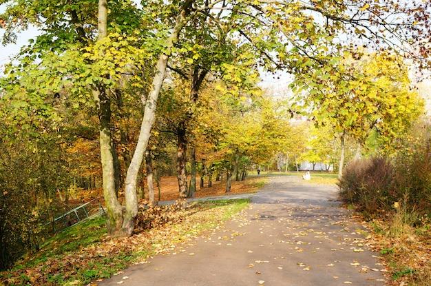 公園の秋の木々の下の小道