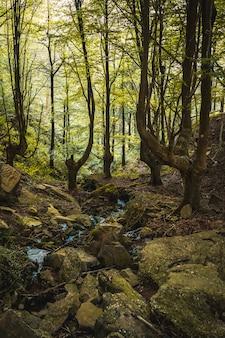 ブナの森を上ってサンセバスチャン近くのウルニエタのモンテアダーラに向かいます。バスク国ギプスコア。縦の写真