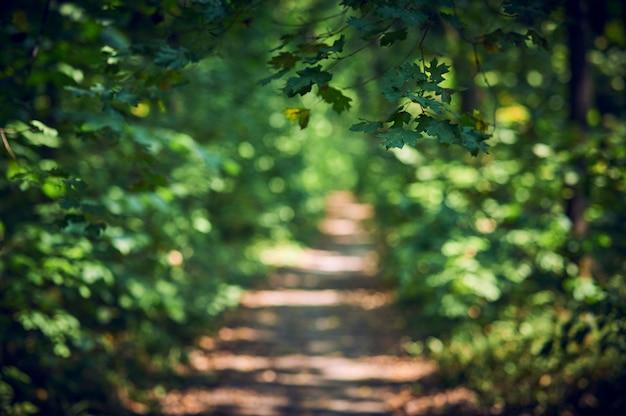 Путь путь в летний солнечный лес. выборочный фокус