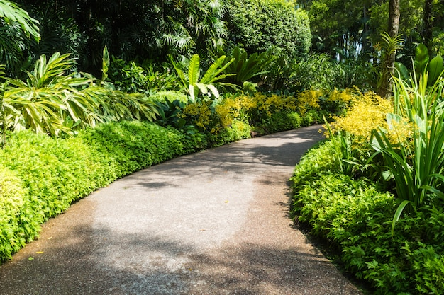 Path with a frame of yellow orchids