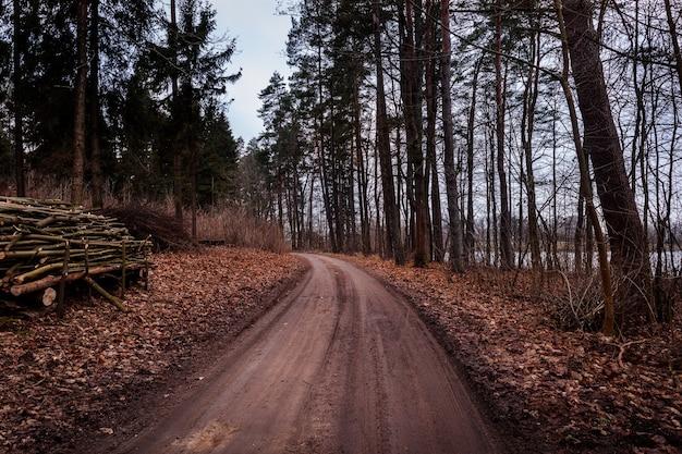 秋の森の真ん中にある湖の小道