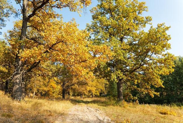 Тропинка осенний дубовый лес