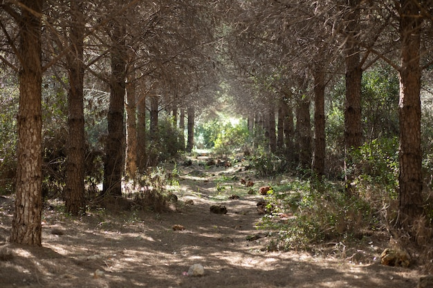 自然の中で木の間の経路