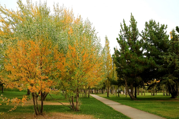 Pathway in the bublic garden of beautiful fall foliage in el calafate, patagonia, argentina
