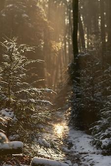 Тропа покрыта снегом в лесу, в окружении зелени под солнечным светом