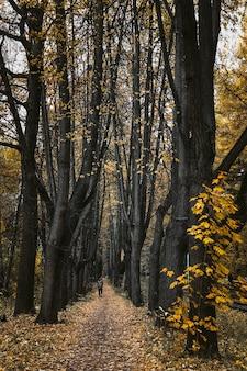 가을 숲에서 노란 낙엽으로 움츠린 통로