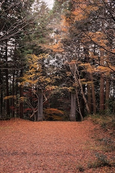 Pathway in a forest surrounded by trees covered in colorful leaves in the autumn