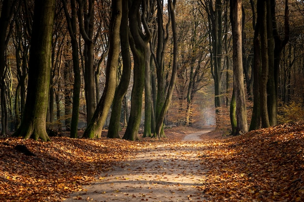 Sentiero in una foresta circondata da alberi e foglie durante l'autunno